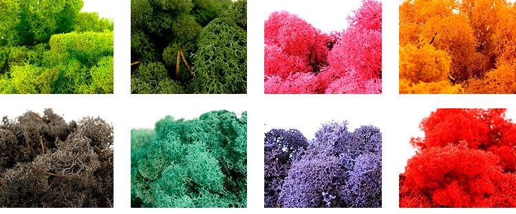 vegetal-cor-faustodecor